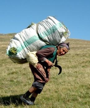 Yaz aylarını yaylalarda geçiren kadınlar eylül ayı sonuna kadar süren mevsimlik göç gerçekleştiriyor.