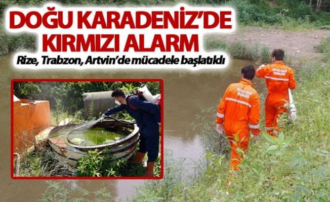 Kırmızı alarm: Rize, Trabzon ve Artvin'de mücadele başlatıldı