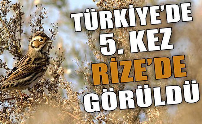 `Küçük Kiraz Kuşu`, Türkiye`de 5`inci Kez Görüldü